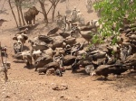 Feeding the vultures outside our hotel at Victoria Falls, Zimbabwe.